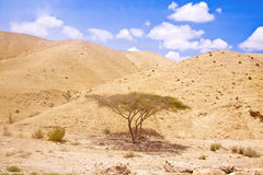 Arava desert. The Arava desert, different colored sand and stones. Israel Royalty Free Stock Image