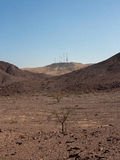 Arava desert. Rare trees in the stone desert Arava Stock Photography
