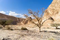 Arava desert travel in Israel Stock Image