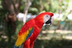 Aravogel in tuin Stock Afbeeldingen