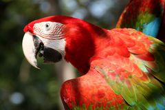 Aravogel in tuin Royalty-vrije Stock Afbeeldingen