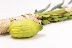 Arba Minim of Sukkot Royalty Free Stock Photo