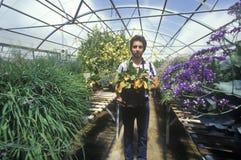 Arbeider bij de Universiteit van Milieu het Onderzoeklaboratorium van Arizona in Tucson, AZ stock foto