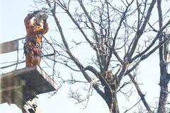 Arbeider die een kettingzaag in een tuin met behulp van die van de lente van de takkenboom met van het opgeheven platform in orde royalty-vrije stock afbeelding