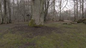 Arbeider die met kettingzaag rond grote boom in park lopen stock videobeelden