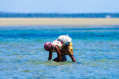 Arbeider die mosselen in de kust van Mozambique verzamelen stock foto's