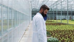Arbeider die in serre mobiel gebruiken en het spreken op smartphone lopen Landbouwingenieur die in serre werken stock footage