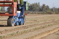 Arbeider het voeden de carrousel van de plantmachinemachine Tomatenzaailingen Royalty-vrije Stock Foto's