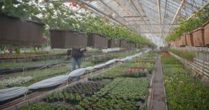 Arbeider het water geven bloemen in 4K stock footage