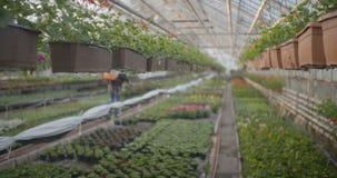 Arbeider het water geven bloemen in 4K stock videobeelden
