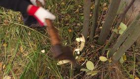 Arbeider met bijl hakkende struiken stock video