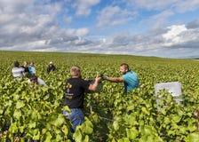 Arbeiders in Champagne Vineyard Verzy Stock Fotografie