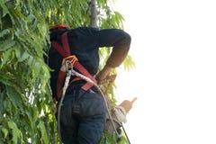 Arbeiders die bomen beklimmen stock fotografie