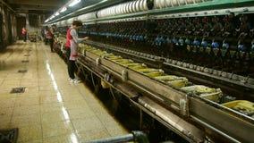 Arbeiders die op workshop winden Zijderupscocon bij zijdefabriek stock footage