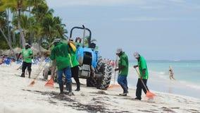Arbeiders die strand van overzees onkruid schoonmaken stock videobeelden