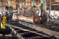 Arbeiders in een zaagmolen stock foto