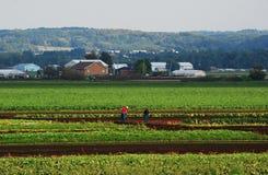 Arbeiders op een gebied Stock Fotografie