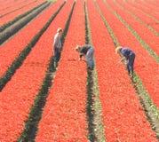 Arbeiders op het gebied stock afbeelding