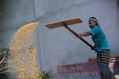 Arbeiders uitgespreid maïsgewas voor het drogen bij een in het groot korrelmarkt Stock Afbeelding
