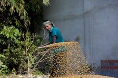 Arbeiders uitgespreid maïsgewas voor het drogen bij een in het groot korrelmarkt Royalty-vrije Stock Foto