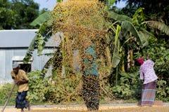 Arbeiders uitgespreid maïsgewas voor het drogen bij een in het groot korrelmarkt Royalty-vrije Stock Afbeeldingen