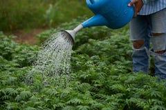 Arbeidershanden die jonge Goudsbloembloem met gieter i water geven stock afbeeldingen