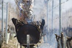 Arbeit-brennende Niederlassung des Weins stockfotografie