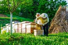Arbeit im Bienenhaus Stockbild