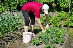 Arbeit im Garten Stockbilder
