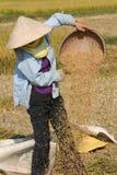 Arbeiten an dem ricefield Lizenzfreie Stockbilder