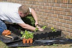 Arbeiten im Garten Lizenzfreie Stockfotografie