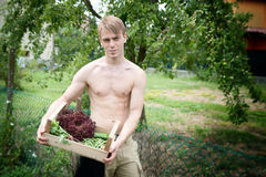 Arbeiten im Garten Stockfoto