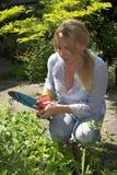 Arbeiten im Garten an einem Sommertag Stockbilder