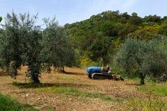 Arbeiten im Olivenhain stockbild