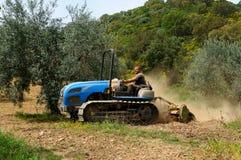 Arbeiten im Olivenhain lizenzfreie stockfotografie