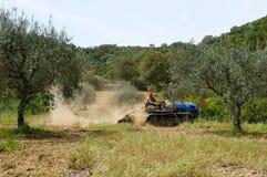 Arbeiten im Olivenhain lizenzfreies stockfoto