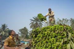 Arbeiten laden zum Aufnahmenpackwagen auf grünen Bananen Stockfotografie