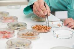 Arbeiten mit biologischem Material im Labor Stockbilder