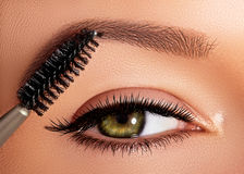 Arbeiten Sie die Frau um, die Lidschatten, Wimperntusche auf Augenlid, Wimper und Augenbraue unter Verwendung der Make-upbürste a Stockfoto