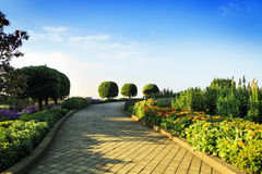 Arbeiten Sie an inthanon Berg, Chiang Mai, Thailand im Garten Stockfotografie