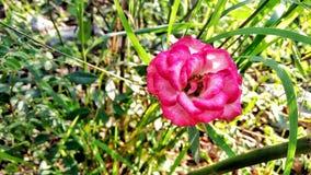 Arbeiten Sie mit Blumen, Details des Gartens, Grün, Frühling, Freude an den Blumen im Garten Lizenzfreies Stockfoto