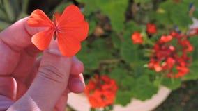 Arbeiten Sie mit Blumen, Details des Gartens, Grün, Frühling, Freude an den Blumen im Garten Lizenzfreie Stockbilder