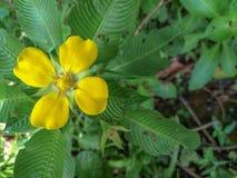 Arbeiten Sie mit Blumen, Details des Gartens, Grün, Frühling, Freude an den Blumen im Garten Stockfoto