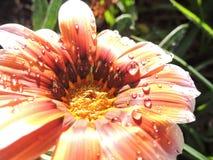 Arbeiten Sie mit Blumen, Details des Gartens, Grün, Frühling, Freude an den Blumen im Garten Stockbild