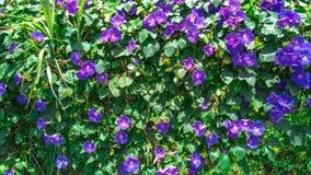 Arbeiten Sie mit Blumen, Details des Gartens, Grün, Frühling, Freude an den Blumen im Garten Stockbilder