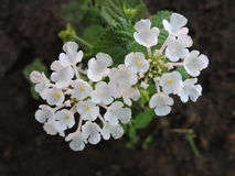 Arbeiten Sie mit Blumen, Details des Gartens, Grün, Frühling, Freude an den Blumen im Garten Lizenzfreie Stockfotografie