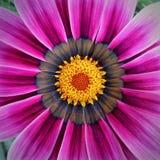 Arbeiten Sie mit Blumen, Details des Gartens, Grün, Frühling, Freude an den Blumen im Garten Stockfotografie
