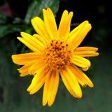 Arbeiten Sie mit Blumen, Details des Gartens, Grün, Frühling, Freude an den Blumen im Garten Lizenzfreie Stockfotos