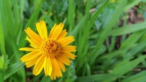 Arbeiten Sie mit Blumen, Details des Gartens, Grün, Frühling, Freude an den Blumen im Garten Lizenzfreies Stockbild