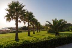 Arbeiten Sie mit Gras, Anlagen und Palmen im Garten. Stockfotos